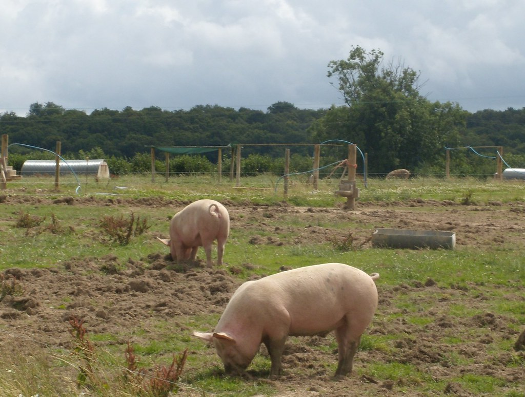 pigs East Grinstead Circular