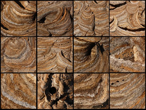 brown collage paper wasp nest mosaic patterns 105mmf28micro