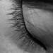 Small photo of eyelash