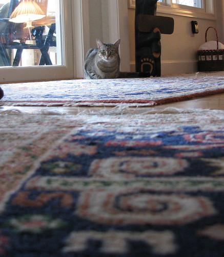 cat carpet