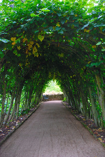 Light at the End of the Tunnel at Hidcote Manor Garden