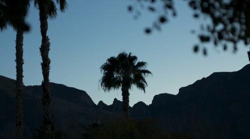 mountains sunrise tucson palm