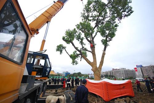2009年松菸大巨蛋的護樹抗爭