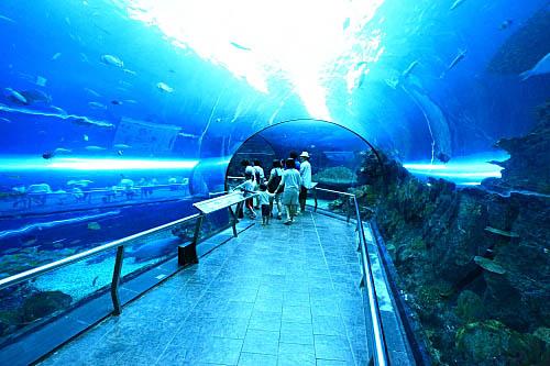 6T91海生館-珊瑚王國-海底隧道