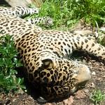 Woodland Park Zoo Seattle 016