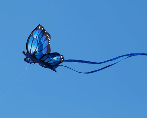 Blue butterfly kite