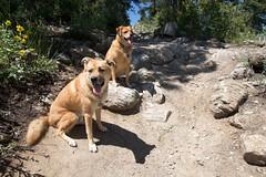 Photograph: Bear & Dozer