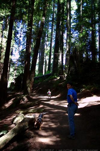 walking in the humboldt redwoods    MG 0986