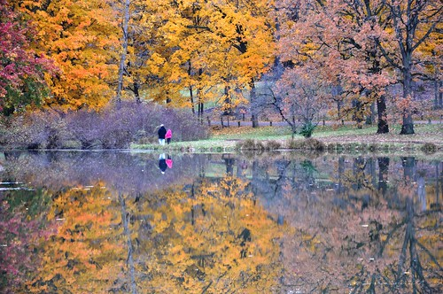 morning pink autumn lake reflection tree fall water yellow gold bright beacon repeat familiar lakemarmo