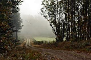 09 2313 - Haute-Vienne, brume sur le circuit de randonnée du Mont Gargan