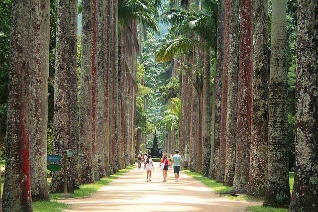 Jardim Botânico  Palm Tree  Rio de Janeiro  Brasil  Flickr