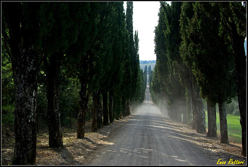 I cipressi che a Villa Arceno... (digitale) - Cypresses  which at Villa Arceno... (digital)