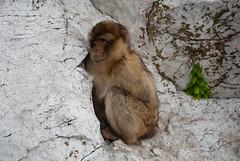 48/365 (2009) Gibraltar