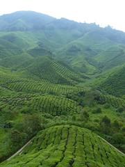 agriculture, field, valley, hill, hill station, highland, terrace, landscape, vegetation, rural area, grassland, plantation,
