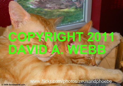 orange usa pet pets cute male animals female cat photography utah kitten feline tabby adorable indoor olympus whiskers phoebe zeus gato precious gata provo striped redmackereltabby catmoments catnipaddicts