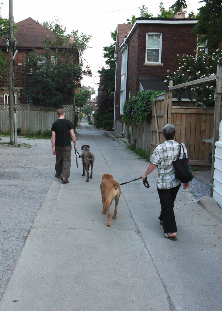 walking dogs