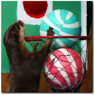 otter played basketball.