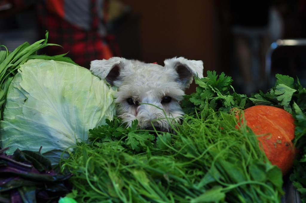 菜堆裡的狗頭 the dog in the vegetables
