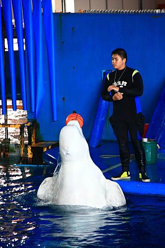 7T15海生館-白鯨-玩球