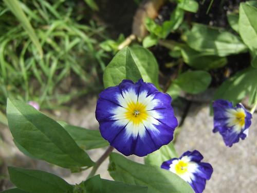 Violet (ii) by anxiousgeek