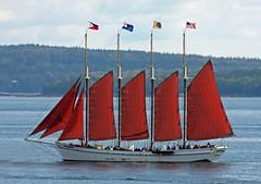 galway hooker(0.0), thames sailing barge(0.0), longship(0.0), full-rigged ship(0.0), lugger(0.0), galeas(0.0), barquentine(0.0), caravel(0.0), barque(0.0), brig(0.0), brigantine(0.0), viking ships(0.0), sail(1.0), sailboat(1.0), sailing ship(1.0), schooner(1.0), vehicle(1.0), sailing(1.0), ship(1.0), sea(1.0), windjammer(1.0), mast(1.0), boating(1.0), sloop-of-war(1.0), tall ship(1.0), watercraft(1.0), boat(1.0),