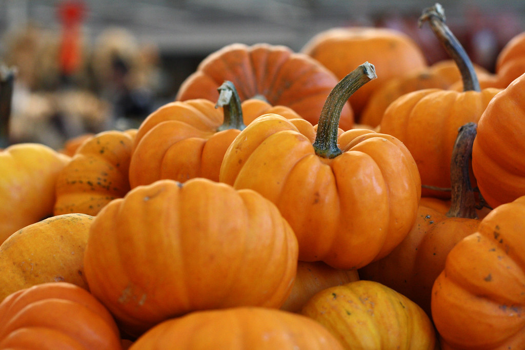 pumpkin cooked, boiled, drained, without salt