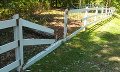 outdoor structure(0.0), handrail(0.0), walkway(0.0), home fencing(1.0), picket fence(1.0), split rail fence(1.0), lawn(1.0),