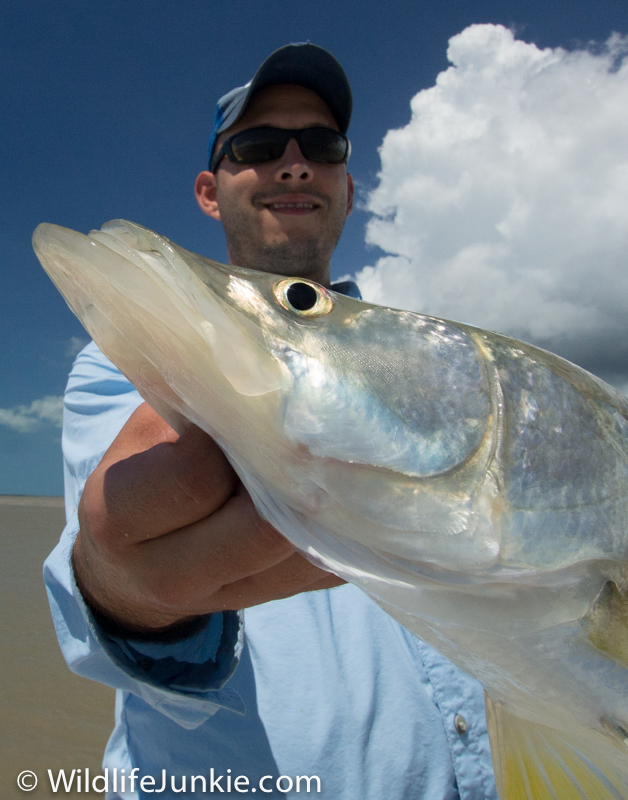 Nice Snook In Everglades