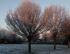 lumière d'hiver / winter light