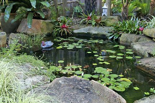 20.1.09 Frog Pond