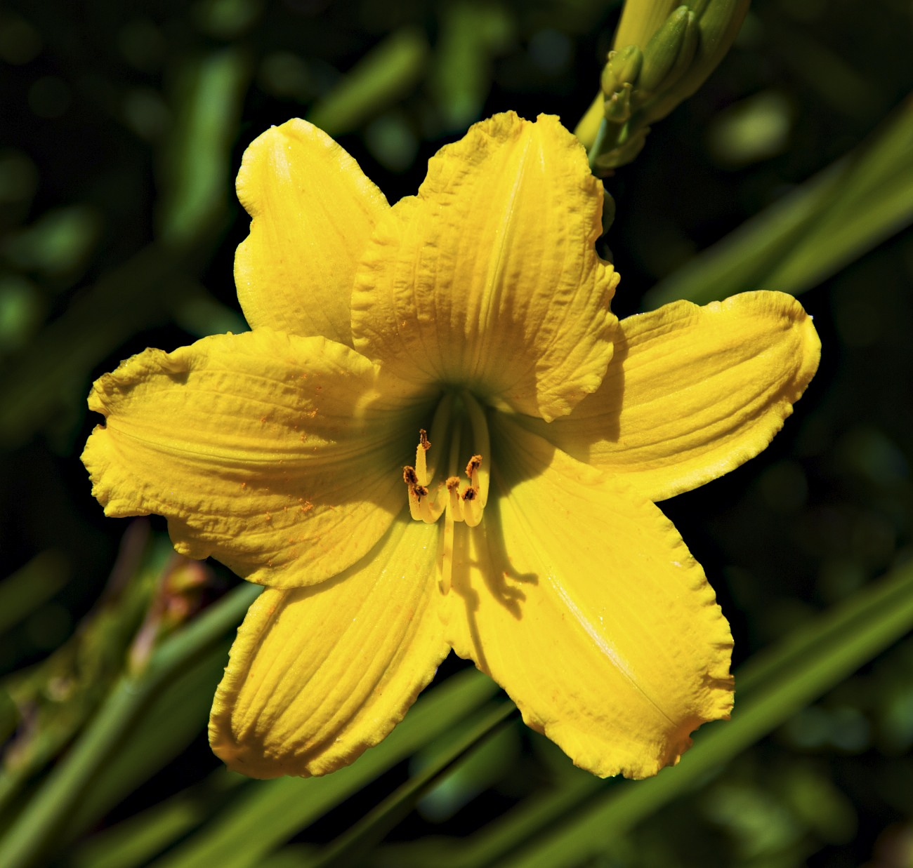 Photos Of Nature Names And Photos Of Yellow Flowers