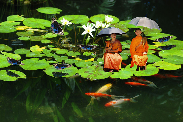 Saffron Robed Monks with Butterflies Rest on a Lotus,  June 1, 2008