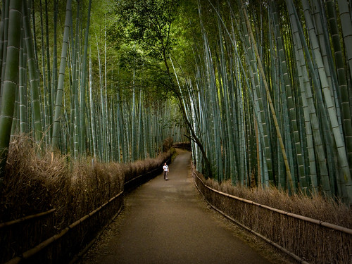 the path of bamboo, revisited #5 (near Tenryuuji temple, Kyoto)