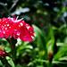 Wet Petals (2 of 3)