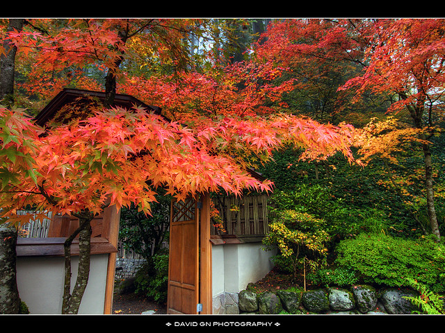 Fall colors at portland japanese garden flickr photo for Japanese garden colors