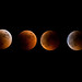 Lunar Eclipse Phase by TaQi cronoz