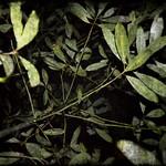 Night Garden - natural colors