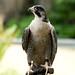 Woodland Park Zoo Seattle 097