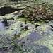 Strephon's walk 20090809