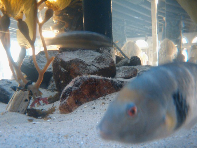 Santa Monica Pier Aquarium Fish By Coffee On Sundays