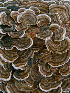 Daily Art Inspiration 10/09/09-Bracket Fungi