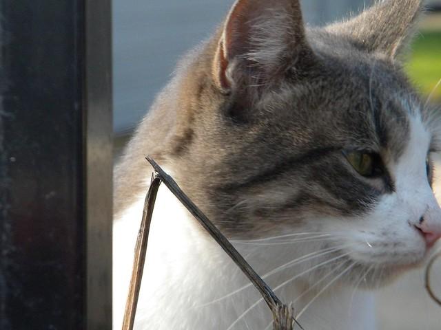Stray Cats Strut Traduction