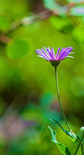 flowers colorado lj portfolio larryjohnson afsvrzoomnikkor200400mmf4gifed