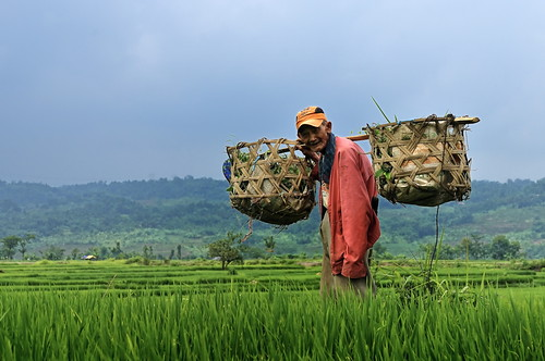people nature smile hat indonesia nikon basket paddy balance westjava padi discovery continent riceplant sawah d300 tamron2875mmf28 supershot abigfave amazingshots citrit theunforgettablepictures concordians goldstaraward