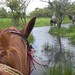 Wetlands horseback in Cosiguina