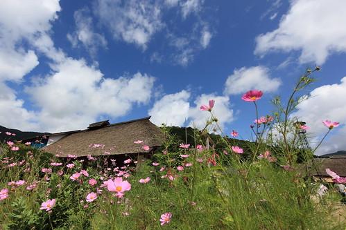 Photo:Flowers / 花(はな) By:TANAKA Juuyoh (田中十洋)