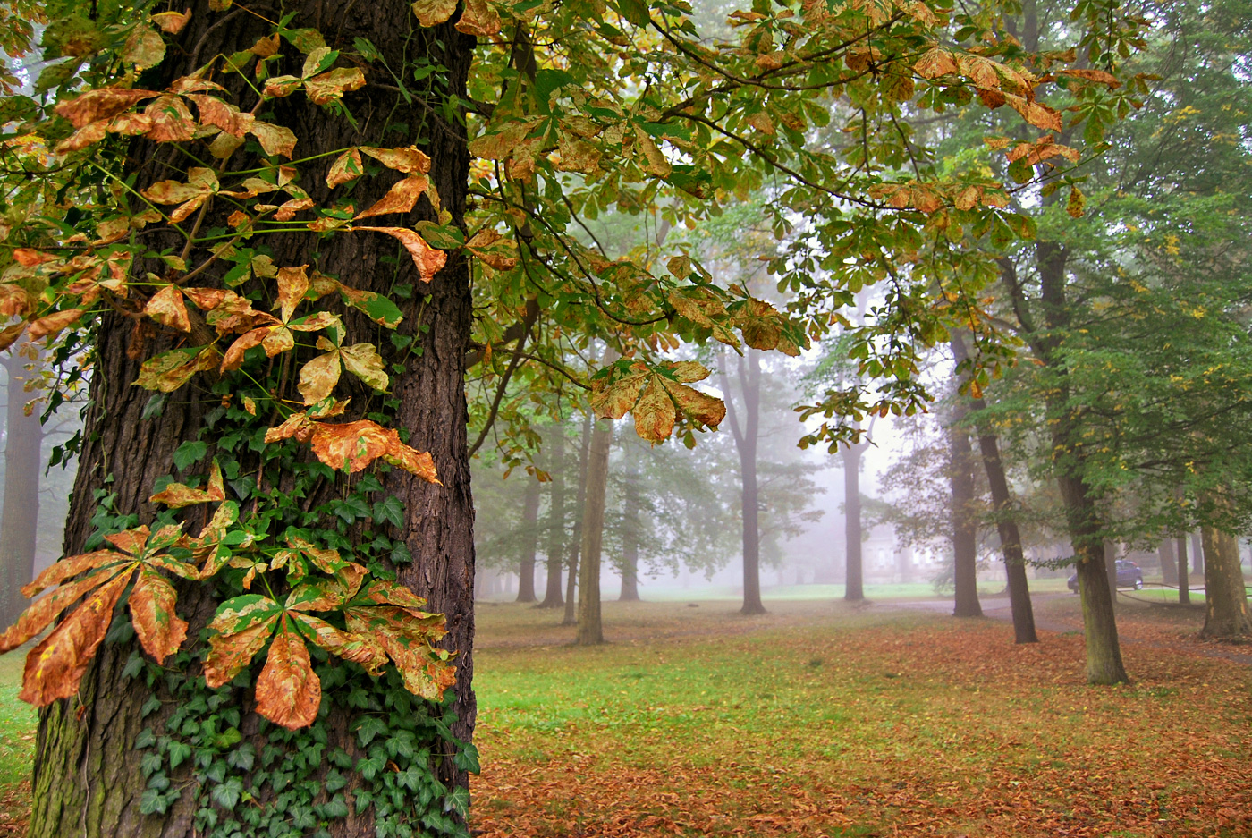 Schlosspark im Nebel