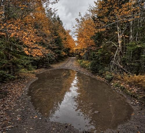 autumn canada forest puddle novascotia fallcolors nikond70s capebreton cs3 photomatix woodroad hdr3ex vertorama