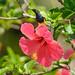 Olive-backed Sunbird by padungtin