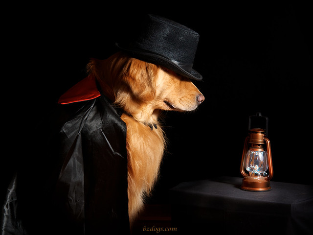 Dog of Mystery